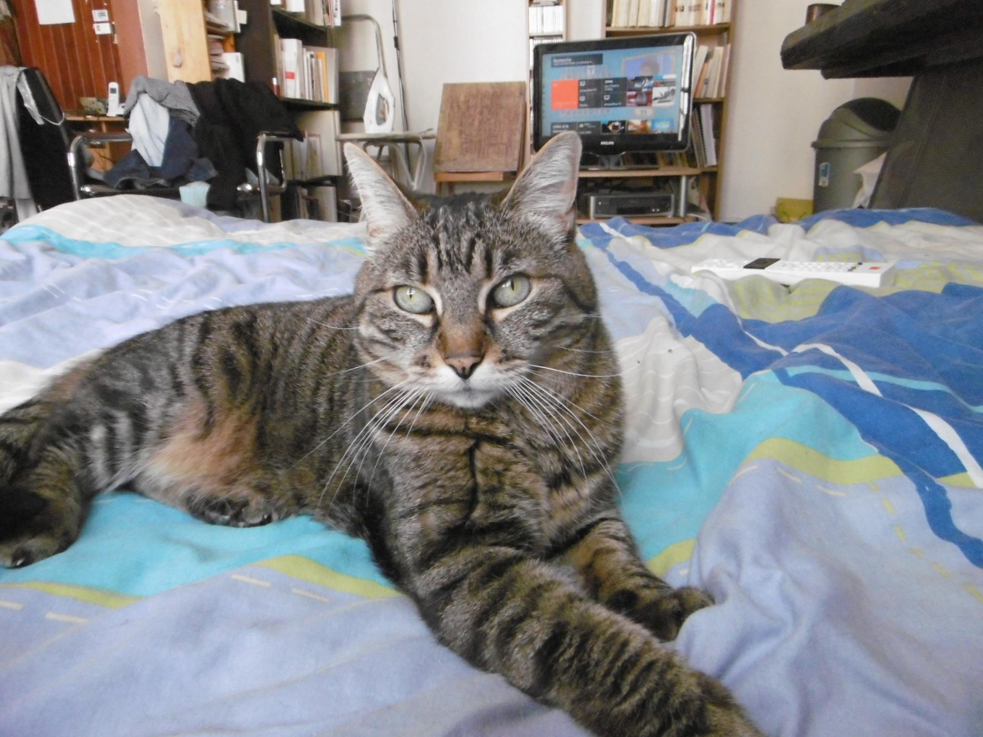 En France, un chat parle français.
